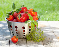 Fresh ripe tomatoes in colander Royalty Free Stock Photo
