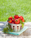 Fresh ripe tomatoes in colander Stock Photo