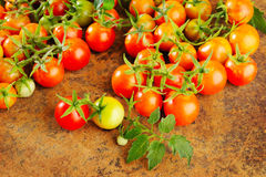 Fresh ripe tomatoes Stock Images