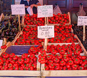 Fresh ripe tomatoes from Corleone, Italy. Royalty Free Stock Photos