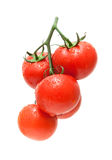 Fresh ripe tomatoes in drops of water close-up on a white backgr Stock Image