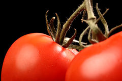 Fresh ripe tomatoes hanging from above on black Royalty Free Stock Image