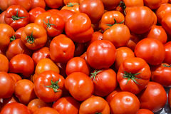 Fresh Ripe Tomatoes. In the market royalty free stock photo