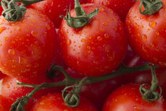 Fresh Ripe Tomatoes on the Vine Royalty Free Stock Photography