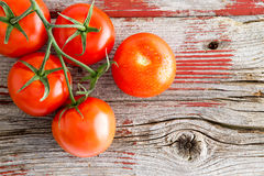 Fresh ripe tomatoes on the vine on a market shelf Stock Photography