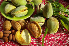 Fresh ripe unpeeled almonds with nutshell and leaves Stock Photography