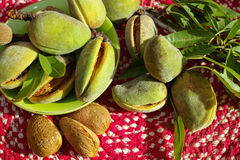 Fresh ripe unpeeled almonds with nutshell and leaves Royalty Free Stock Photo