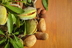Fresh ripe unpeeled almonds with nutshell and leaves Royalty Free Stock Photos