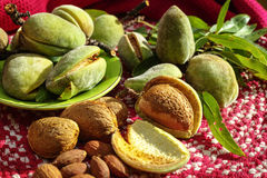 Fresh ripe unpeeled almonds with nutshell and leaves. In Provence, France Royalty Free Stock Photos