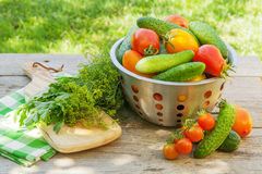 Fresh ripe vegetables Royalty Free Stock Images