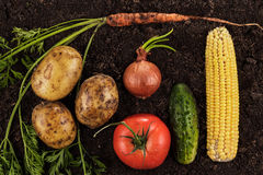 Fresh ripe vegetables on the soil Stock Photo