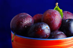 Fresh ripe washed plums Stock Images