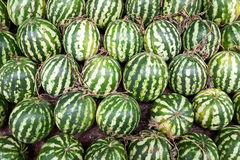 Fresh and ripe watermelons Royalty Free Stock Images