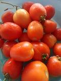 Fresh ripen tomato for salad Royalty Free Stock Photo