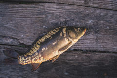 Fresh river fish carp on a wooden background. Fresh river fish carp on a wooden background Royalty Free Stock Images
