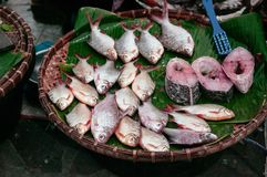 Fresh river fish in Local Thailand morning market a traditional. Fresh river fishes in Local Thailand morning market a traditional fish shop, front view Stock Photos
