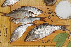 Fresh river fish roach with spices salt, pepper, bay leaf on a cutting wooden board. Russia stock image