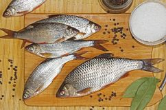 Fresh river fish roach with spices salt, pepper, bay leaf on a cutting wooden board. Russia royalty free stock photo
