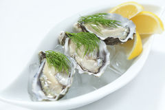 Fresh river oysters. Fresh Hawkesbury river oysters on ice with lemon wedges Royalty Free Stock Image