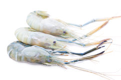 Fresh River Shrimp. Stock Image