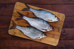Fresh roach fish on wooden backround Royalty Free Stock Photos