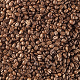 Fresh roasted coffee beans Royalty Free Stock Photo