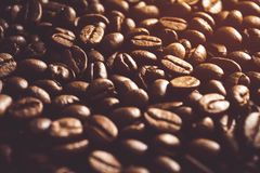 Fresh roasted coffee beans background. Fresh coffee beans background, Fresh roasted coffee beans background in morning royalty free stock images