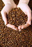 Fresh roasted coffee beans in hands Royalty Free Stock Photo