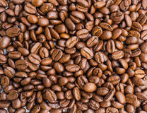 Fresh roasted coffee beans Royalty Free Stock Photography