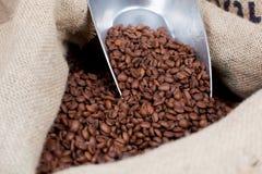 Fresh Roasted Coffee Beans Stock Photos