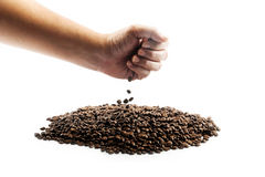 Fresh roasted coffee beans pouring in hand Stock Images