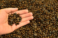 Fresh roasted coffee grain in hand Stock Photos