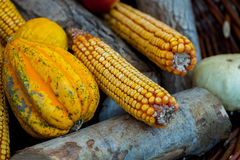 Fresh roasted or grilled corncobs. Grilled Corn for sale on the street Stock Photos