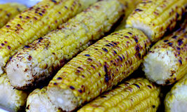Fresh roasted or grilled yellow maize corncobs. Stock Photography