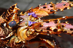 Fresh rock lobster head in seafood market.  Royalty Free Stock Photo