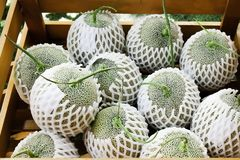Fresh rock melon or cantaloupes melons , green melon nets group in brown wood box stock image