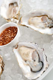 Fresh rock oysters Royalty Free Stock Images