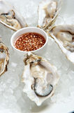 Fresh rock oysters Royalty Free Stock Photography