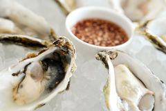 Fresh rock oysters Stock Photography