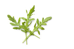 Fresh rocket salad leaves Stock Image