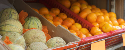 Fresh rockmelons or cantaloup Royalty Free Stock Photography