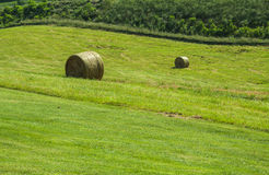 Fresh roled hay on a green pasture Stock Photography