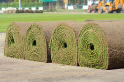 Fresh rolled-up grass turf Stock Image