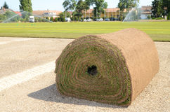 Fresh rolled-up grass turf Stock Photo