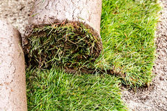 Fresh rolled-up grass turf. For garden Royalty Free Stock Photo