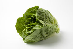 Fresh Romaine Lettuce Royalty Free Stock Image