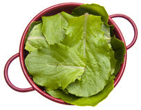 Fresh Romaine Lettuce Royalty Free Stock Photography