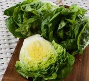 Fresh Romaine Lettuce Stock Images