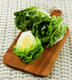 Fresh Romaine Lettuce Royalty Free Stock Image