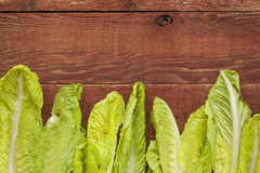 Fresh romaine lettuce Royalty Free Stock Images
